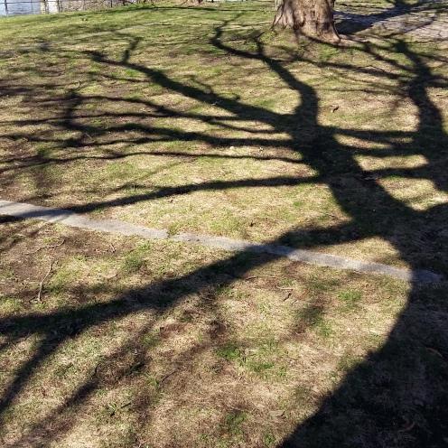 2017_März 27 Bäume4