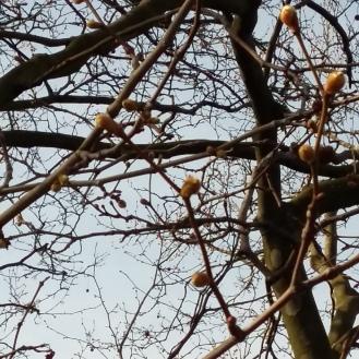 2017_April 2 Bäume1