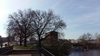 2017_April 2 Bäume2