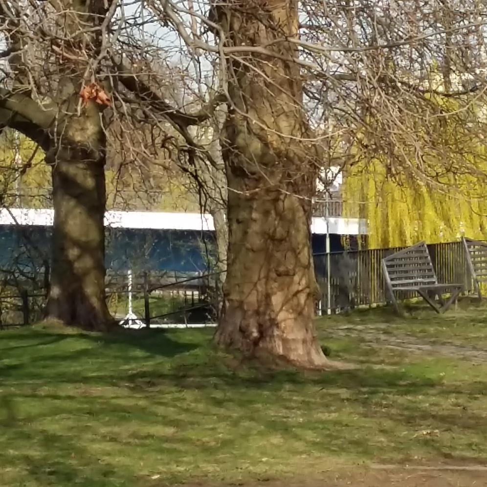 2017_April 2 Bäume3
