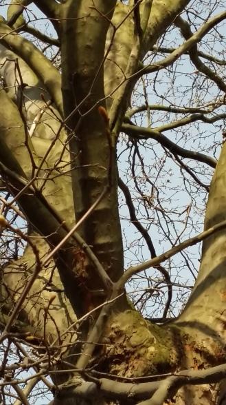 2017_April 2 Bäume4
