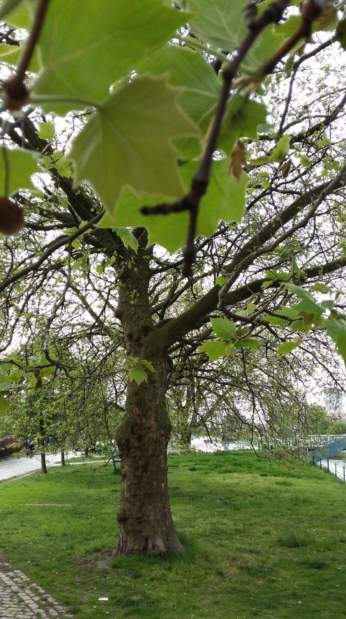 2017_Mai 14 Bäume1