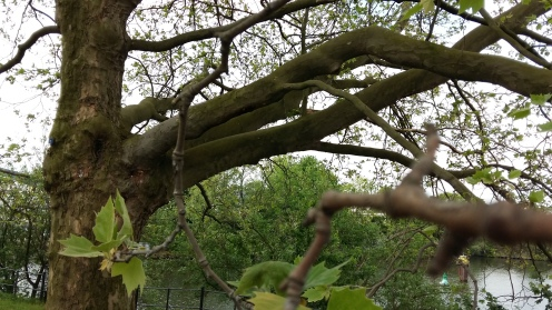 2017_Mai 14 Bäume2