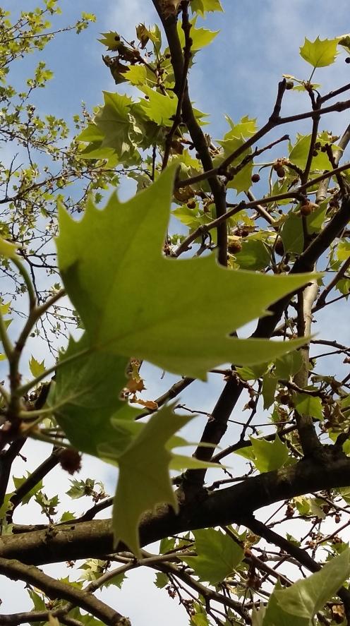 2017_Mai 14 Bäume3