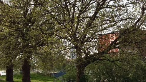 2017_Mai 14 Bäume4