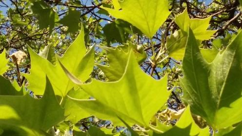 2017_Mai 23 Bäume3