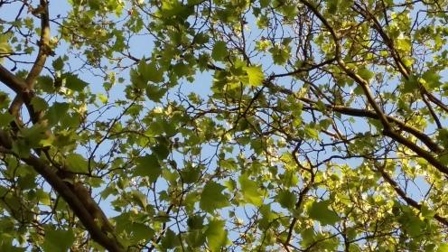 2017_Mai 23 Bäume4