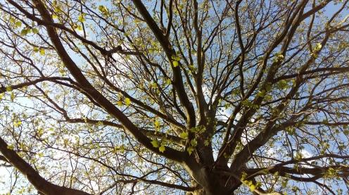 2017_Mai 7 Bäume3