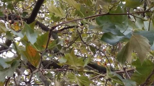 Bäume im Herbst 2