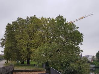 4 Baume am Fluss