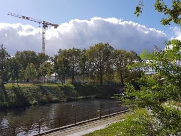 Vier Baume am Fluss