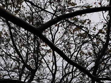 Baume im Sturm