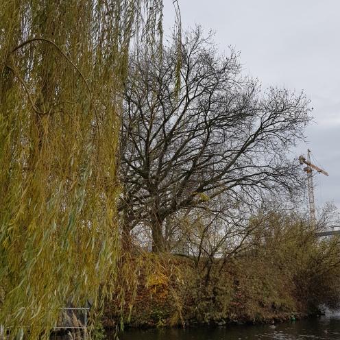 Vier Baume