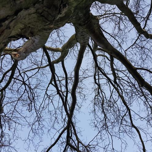 Deutschleitbaume