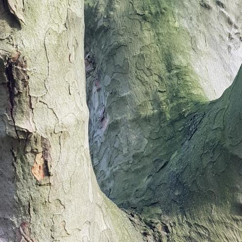 Treestrees