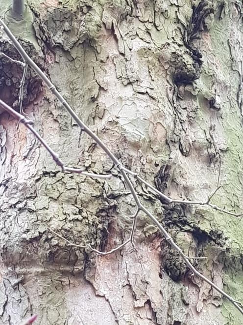 Bauma am Fluss