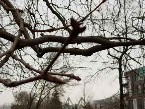 Trees 22Jan