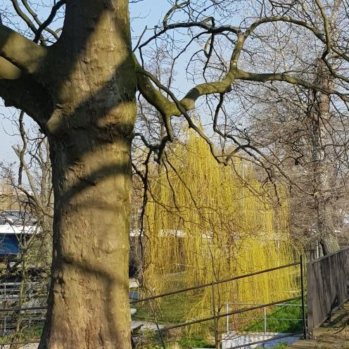 April Baum 1