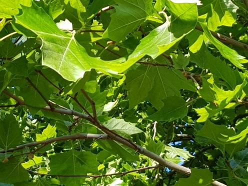 Leaf and trees