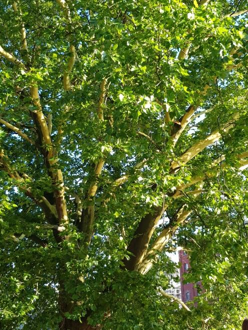Green tree Day