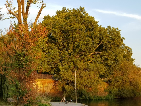 Rivertrees