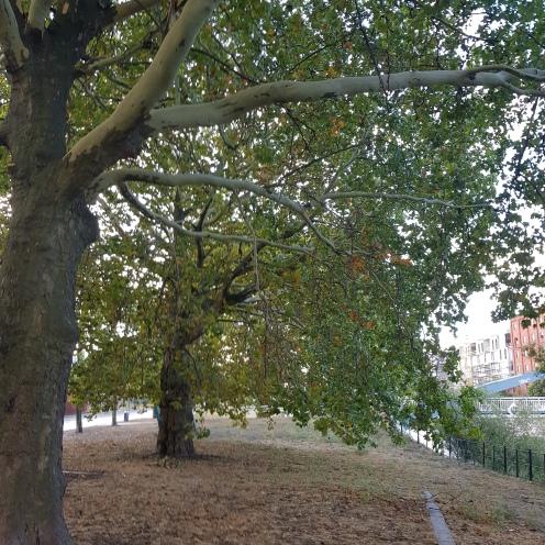 Baume am Fluss