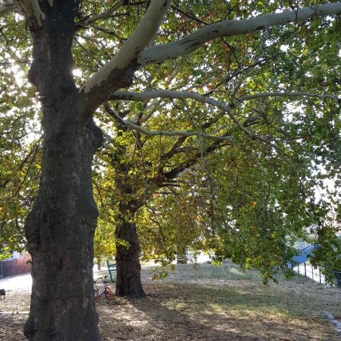 Deutscheleitkultur, Christian Raum, Trees at the River, Leaf, golden autumn, Herbst, Herbstlaub