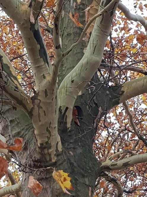 Four trees Berlin
